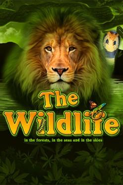 Играть The Wildlife онлайн